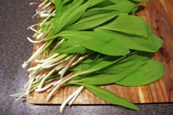A sure sign, and smell, of spring here: Ramps