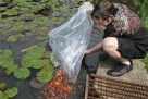 Cemetery goldfish pond memorializes daughter