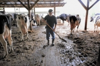 Pennsylvania dairy farmer Ralph Frye faces an endless round of tasks from daybreak