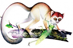 Carnegie Museum of Natural History contributes analysis to important primate fossil find in China