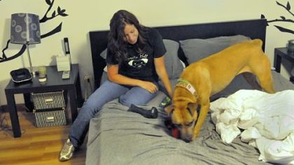 Amy Dengler, who runs Hello Bully, a halfway house for pit bulls, plays with Isis, whose owner has died. Isis is awaiting a home.