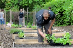 Walkabout: What can keep an urban garden growing?