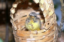 Let's Talk About Birds: Bouncing baby bird season is here
