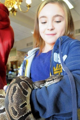 Kaylee Fair, 10, of Cheswick, examines a python at the show, where she had a booth selling snakes she had raised at home. She was considering buying the python.