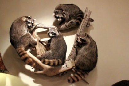Four Racoons wall art was just one of the many ways former woodland creatures are transformed into family room conversation pieces.