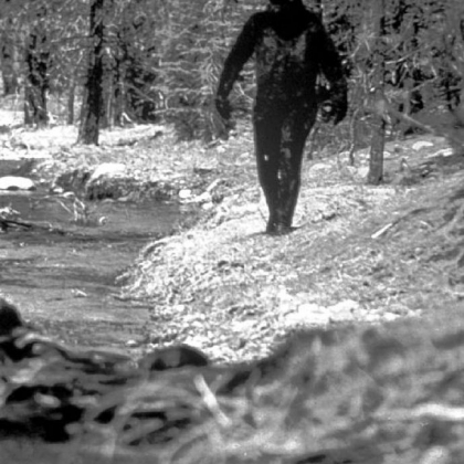 A 1977 still photo made from a 16 mm film by Ivan Marx reportedly showing the legendary Bigfoot in the hills of northern California.