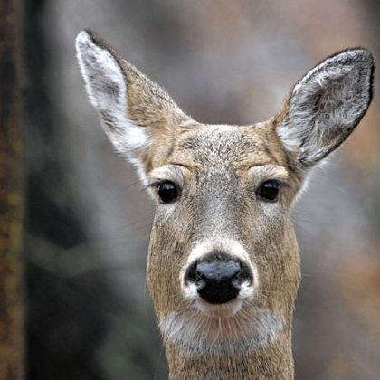 When deer behaviors change in winter, late-season hunters should consider changing their tactics.