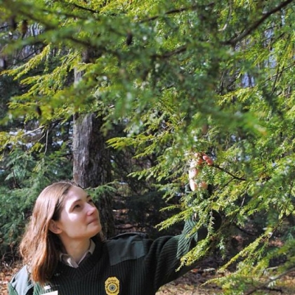 Stacie Hall of Ohiopyle State Park checks trees for invasive insects.