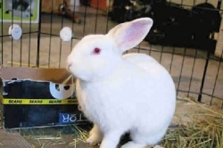 Pet Tales: Be cautious in giving pet bunnies as gifts