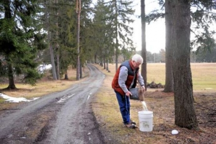 "Dan Wingard collects sap from one of 360 buckets he has on his and surrounding land. He pays his neighbors ""rent"" in the form of syrup."