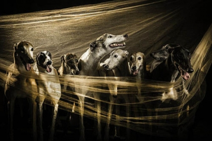 "Pittsburgh artist Harry Giglio is exhibiting and selling fine art photographs of greyhounds rescued through Steel City Greyhounds at a fundraiser called ""Release the Hounds"" on Friday at 3G Gallery in the Westin Convention Center hotel, Downtown."
