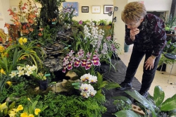 Orchid Society plans world-class orchid collection at Phipps
