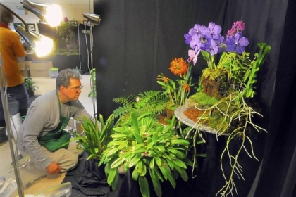 Lester Olson of Ben Avon Heights works on his exhibit at the Orchid Society of Western Pennsylvania Annual Show at Phipps Garden Center in Shadyside.