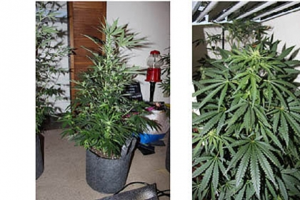 North Side man operated a marijuana grow lab in an apartment.